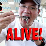 Eating Live Octopus in Korea