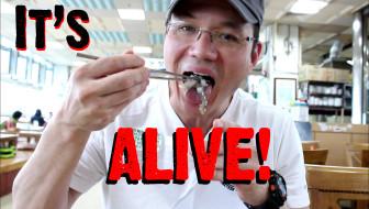 live octopus in korea