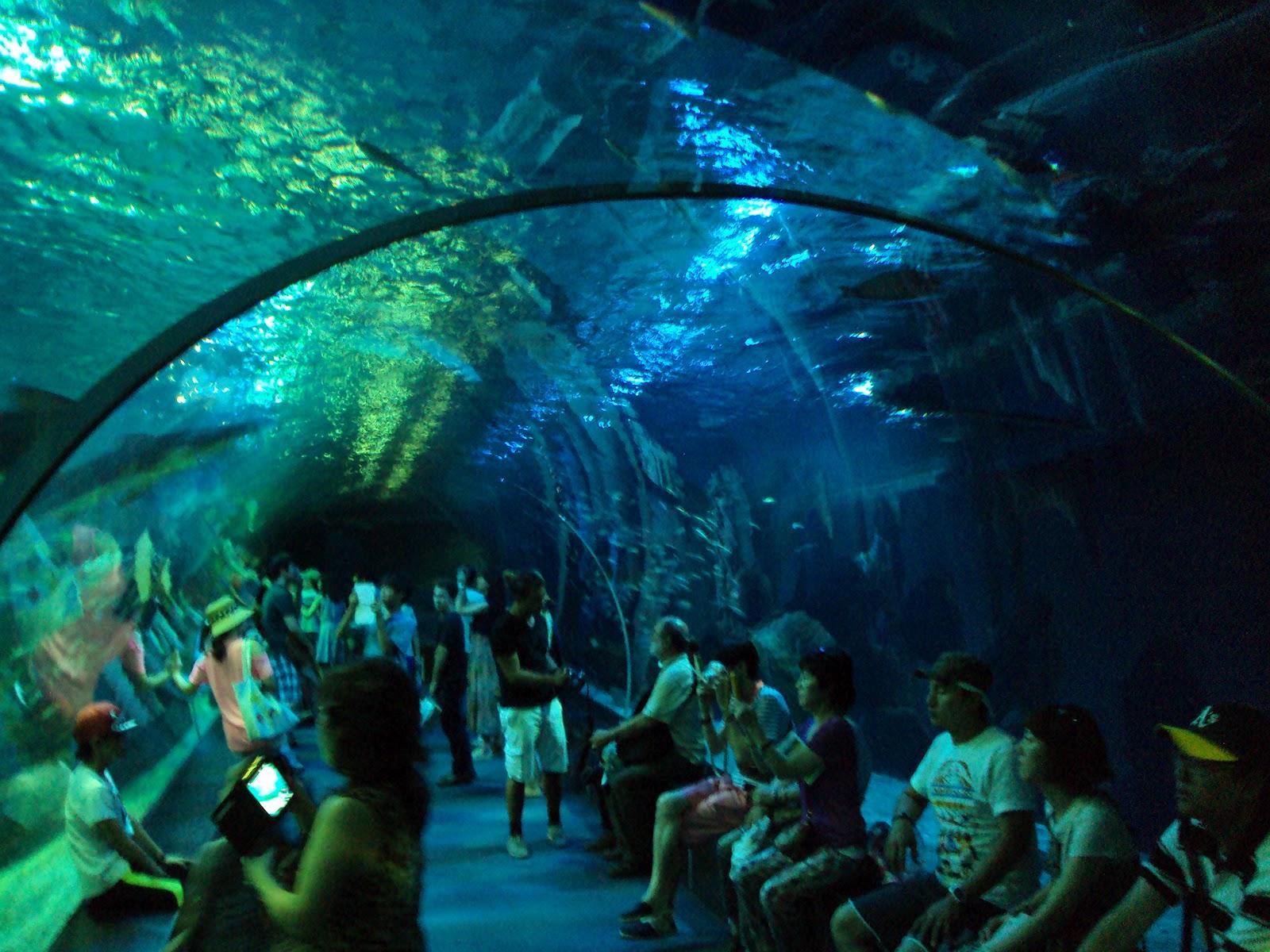 The Busan Aquarium in Haeundae Beach - Red Dragon Diaries